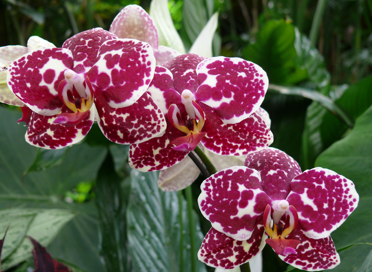 Orchid Spots Great