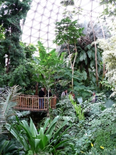 bridge at Bloedel Conservatory