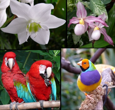 bloedel collage_sm
