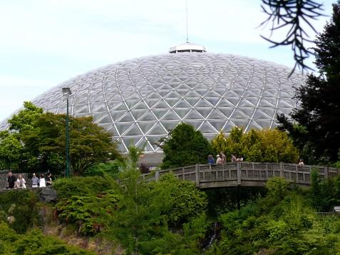 dome nice2