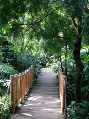 Entrance to the Bamboo Bridge in the Bloedel Conservatory. Photo by Vicky Earle