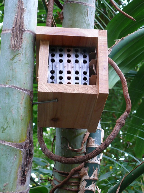 mason bee house bloedel