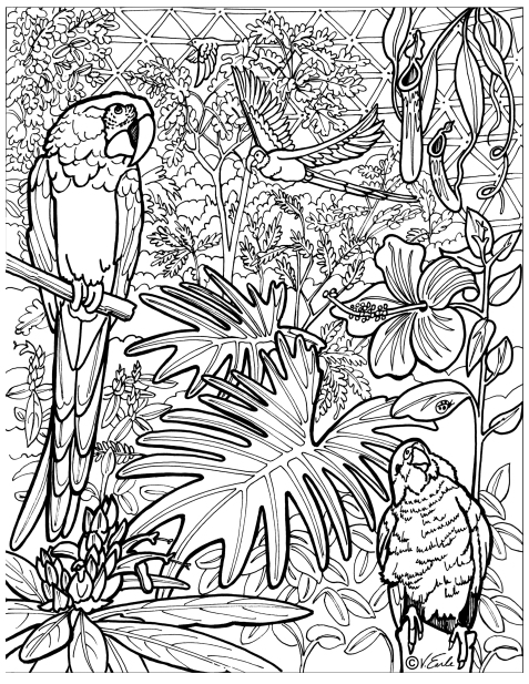 bloedel conservatory colouring page can you name all of the birds and plants bloedel colouring page to print